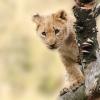 Megnyílt Magyarország első autós Safari Parkja!