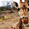 Nyit az ország első Safari Parkja! Nyitvatartás, cím és jegyárak itt!