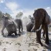 Cirkuszok Éjszakája 2020 - Elefántfürdetés, porond látogatás és felvonulás is vár!