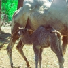 Kis zebra és más cuki újszülöttek hazánk első Safari Parkjában!