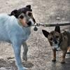 Elfogadta a kutyatartók javaslatát a miniszterelnök! Íme a részletek!