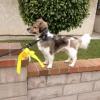 Sárga szalag a kutya pórázon? Miért?