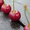 Ingyenes meggyosztással népszerűsítik a gyümölcsöt a termelők! Helyszínek itt!