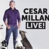 Cesar Millan 2017-ben visszatér - Jegyek a bécsi Cesar Millan Live showra már kaphatóak!