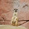 Ingyenes jegyek az Állatkertbe 4 napig!