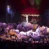 Ingyenes színházjegy és cirkuszjegy is lesz a Lázár Ervin programban!