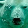 200 forintos jeggyel várja az Állatkert a gyerekeket március elején!