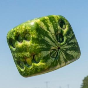 Kocka alakú görögdinnyét termesztenek Hódmezővásárhelyen!