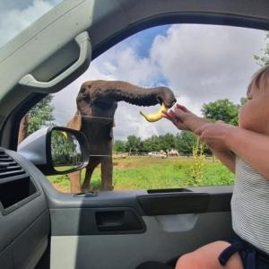 INGYEN mini-cirkuszi előadás 2 napig a Safari Parkban!