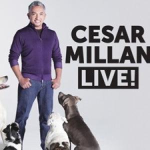 Cesar Millan 2017-ben Budapesten az Arénában - Jegyek a Cesar Millan Live showra itt!