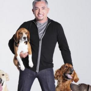 Kutyások figyelem! Cesar Millan kutyákat keres a budapesti előadásához!