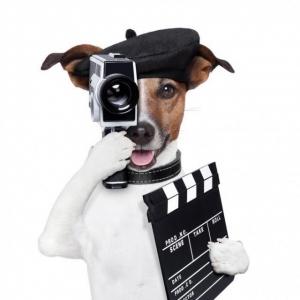 Cesar Millan magyar szakmai referense problémás kutyákat keres! Jelentkezz te is!